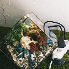 Светильник-флорариум Living ocean colour