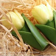 Мыло Тюльпаны